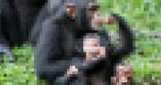 Macacos e pixels